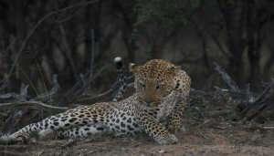 Jawai Leopard Camp Pali